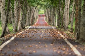 imagen del camino hacia tu futuro
